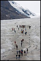 People in delimited area at the toe of Athabasca Glacier. Jasper National Park, Canadian Rockies, Alberta, Canada ( color)