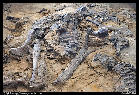 Wild West Badlands Tours Fossils