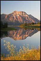 Vimy Peak and reflection in Middle Waterton Lake, sunrise. Waterton Lakes National Park, Alberta, Canada