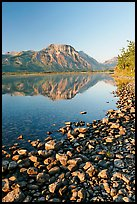 Pebbles, Middle Waterton Lake, and Vimy Peak, early morning. Waterton Lakes National Park, Alberta, Canada ( color)