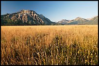 Tall grass prairie and mountains. Waterton Lakes National Park, Alberta, Canada