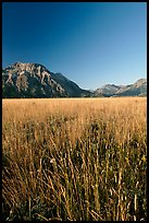 Grass prairie and front range Rocky Mountain peaks. Waterton Lakes National Park, Alberta, Canada ( color)
