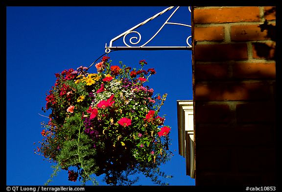Hanging basket of flowers. Victoria, British Columbia, Canada (color)