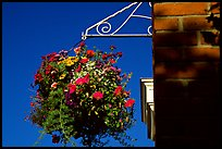 Hanging basket of flowers. Victoria, British Columbia, Canada