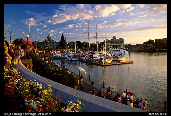 Flowers and Inner Harbour at sunset. Victoria, British Columbia, Canada (color)