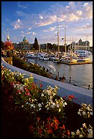Flowers and Inner Harbour at sunset. Victoria, British Columbia, Canada