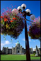 Baskets of flowers suspended from lamp post with parliament in the background. Victoria, British Columbia, Canada (color)