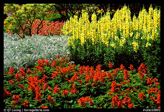 Patches of flowers. Butchart Gardens, Victoria, British Columbia, Canada (color)