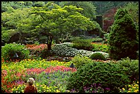 Visitor looking at flowers and trees in the Sunken Garden. Butchart Gardens, Victoria, British Columbia, Canada