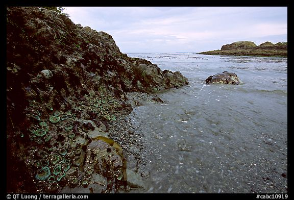 Cove and rock festoned with anemones south of Long Beach. Pacific Rim National Park, Vancouver Island, British Columbia, Canada