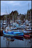 Commercial fishing fleet at dawn, Uclulet. Vancouver Island, British Columbia, Canada ( color)