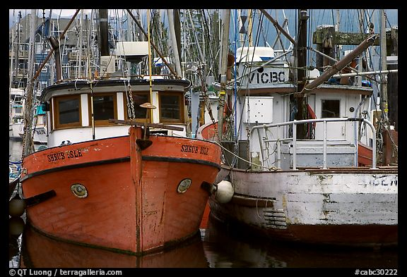 Fishing fleet, Uclulet. Vancouver Island, British Columbia, Canada
