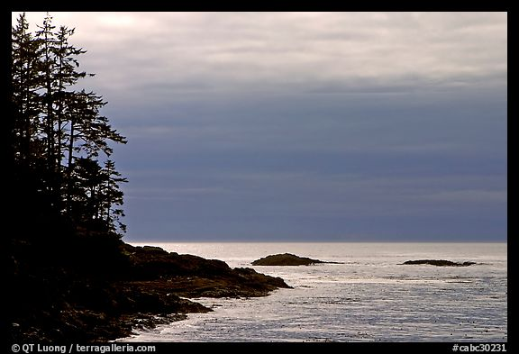 Trees and silvery light on Ocean, late afternoon. Pacific Rim National Park, Vancouver Island, British Columbia, Canada (color)