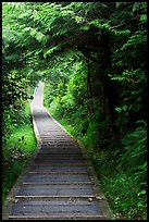 Boardwalk, South Beach trail. Pacific Rim National Park, Vancouver Island, British Columbia, Canada (color)