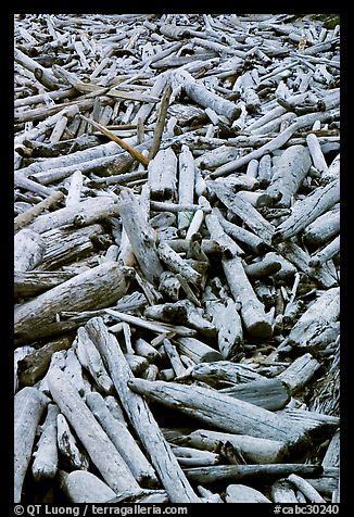 Driftwood, Long Beach. Pacific Rim National Park, Vancouver Island, British Columbia, Canada (color)