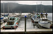 Fishing boats in harbour in Alberni Inlet, Port Alberni. Vancouver Island, British Columbia, Canada ( color)