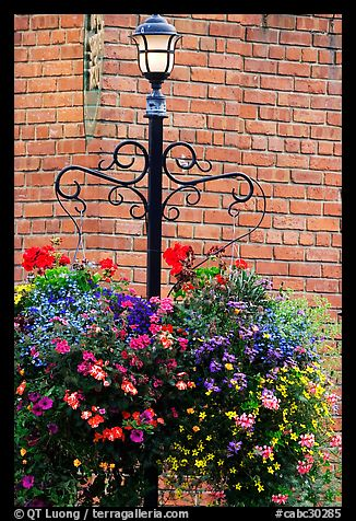 Flowers, street lamp, brick wall. Victoria, British Columbia, Canada (color)