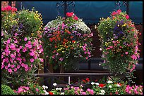 Hanging Flower baskets. Victoria, British Columbia, Canada (color)