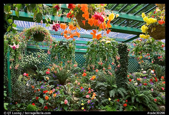 Bower overflowing with hanging baskets. Butchart Gardens, Victoria, British Columbia, Canada (color)