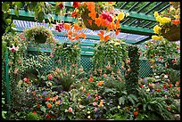Bower overflowing with hanging baskets. Butchart Gardens, Victoria, British Columbia, Canada