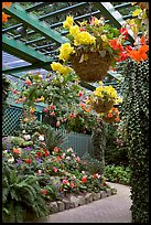 Hanging baskets with begonias and fuchsias. Butchart Gardens, Victoria, British Columbia, Canada