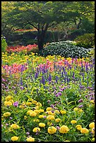 Annual flowers and trees in Sunken Garden. Butchart Gardens, Victoria, British Columbia, Canada (color)