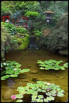 Lotus pond, Japanese Garden. Butchart Gardens, Victoria, British Columbia, Canada (color)