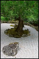 Gravel and tree, Japanese Garden. Butchart Gardens, Victoria, British Columbia, Canada (color)