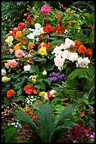Flower arrangement in the Show Greenhouse. Butchart Gardens, Victoria, British Columbia, Canada (color)