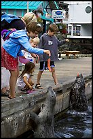 Kids feeding harbour seals, Fisherman's wharf. Victoria, British Columbia, Canada ( color)
