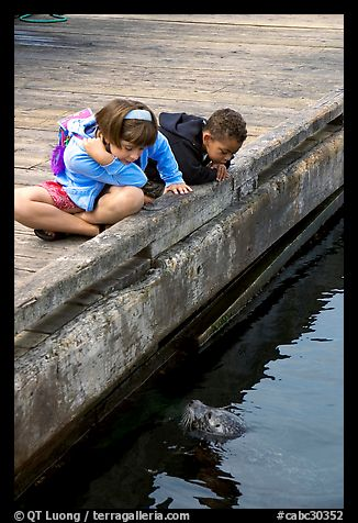 Kidds looking at a harbor seal, Fisherman's wharf. Victoria, British Columbia, Canada