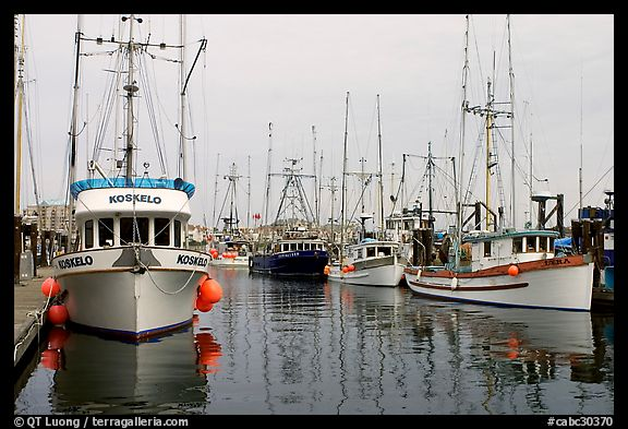 Commercial fishing boats, Upper Harbor. Victoria, British Columbia, Canada