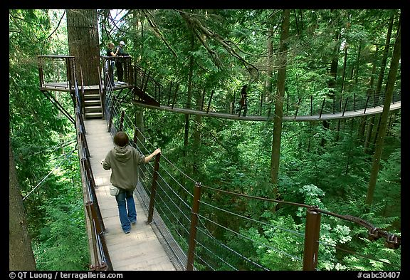 Treetop trail. Vancouver, British Columbia, Canada (color)