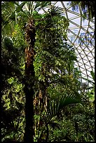 Tropical tree in Bloedel conservatory, Queen Elizabeth Park. Vancouver, British Columbia, Canada ( color)