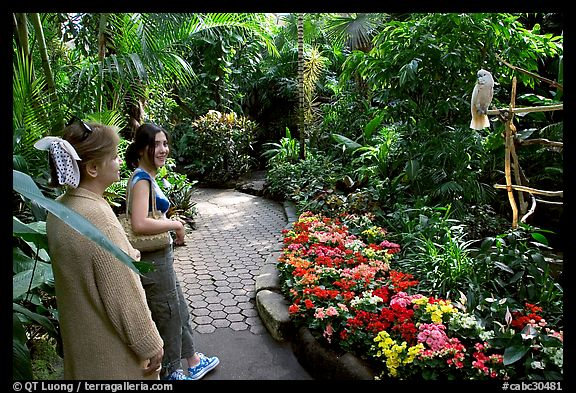 Women listening to the white parrot, Bloedel conservatory, Queen Elizabeth Park. Vancouver, British Columbia, Canada (color)