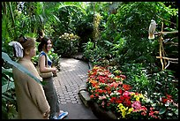 Women listening to the white parrot, Bloedel conservatory, Queen Elizabeth Park. Vancouver, British Columbia, Canada