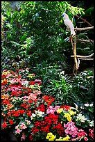 White Parrot and flowers, Bloedel conservatory, Queen Elizabeth Park. Vancouver, British Columbia, Canada ( color)