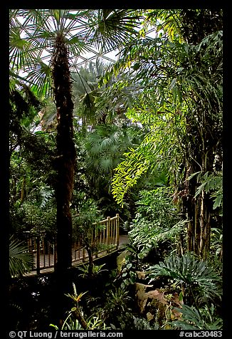 Tropical vegetation inside the dome of the Bloedel conservatory, Queen Elizabeth Park. Vancouver, British Columbia, Canada