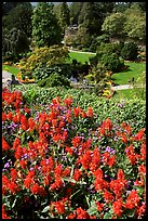 Flowers and sunken garden, Queen Elizabeth Park. Vancouver, British Columbia, Canada ( color)