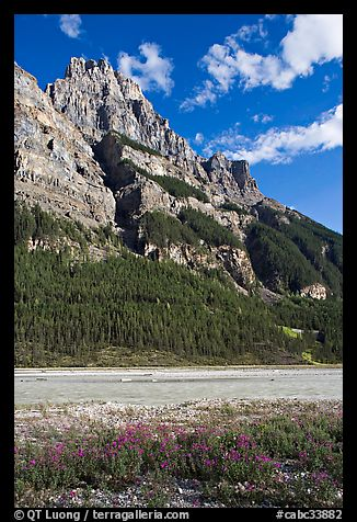 Mt Stephen and the Kicking Horse River, late afternoon. Yoho National Park, Canadian Rockies, British Columbia, Canada (color)