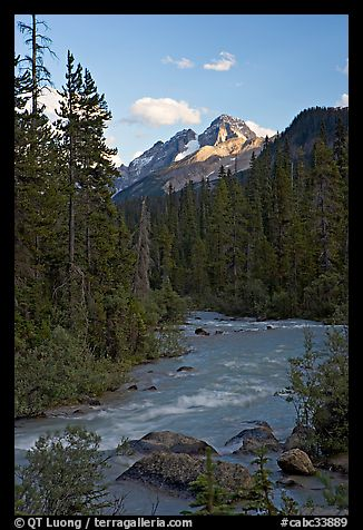 Yoho River, trees, and Cathedral Crags, late afternoon. Yoho National Park, Canadian Rockies, British Columbia, Canada