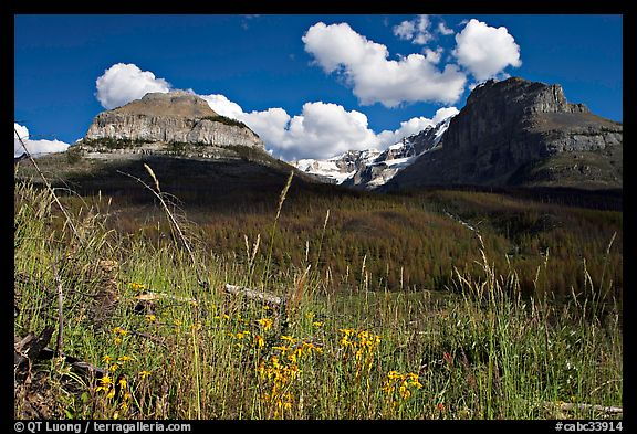 Wildflowers, peaks and Stanley Glacier, afternoon. Kootenay National Park, Canadian Rockies, British Columbia, Canada (color)