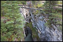 Narrow gorge spanned by fallen trees, Marble Canyon. Kootenay National Park, Canadian Rockies, British Columbia, Canada