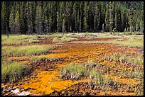 Ochre bed and trees. Kootenay National Park, Canadian Rockies, British Columbia, Canada