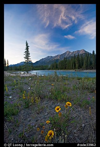 Sunflowers, Kootenay River, and Mitchell Range, sunset. Kootenay National Park, Canadian Rockies, British Columbia, Canada
