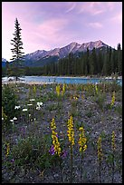 Yellow flowers, Kootenay River, and Mitchell Range, sunset. Kootenay National Park, Canadian Rockies, British Columbia, Canada