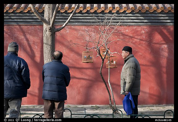 Bird market along red wall. Beijing, China (color)