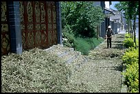Grain being dried on the street. Dali, Yunnan, China (color)
