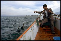 Cormorant fisherman sends out his birds. Dali, Yunnan, China (color)