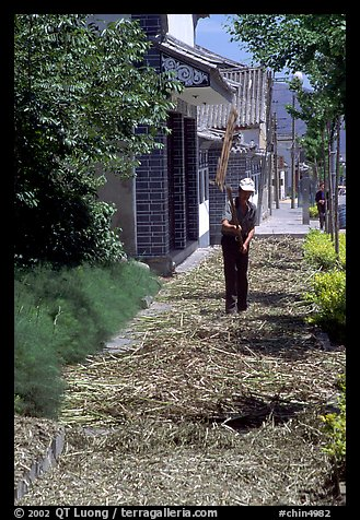 Grain being dried on the street. Dali, Yunnan, China